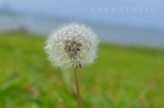 GrassAndSea