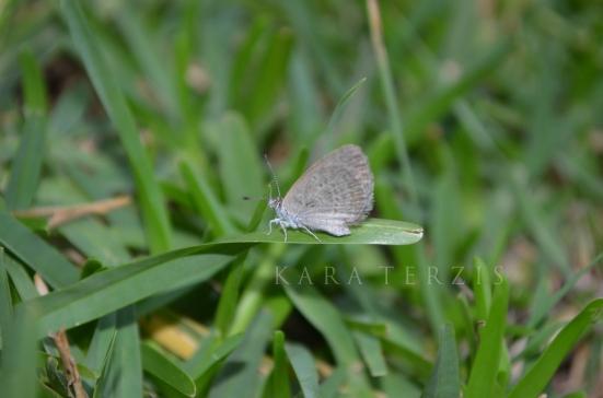 MothThing