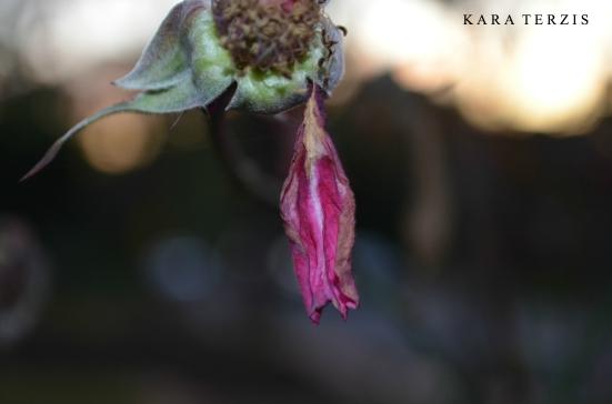 pinkandgold
